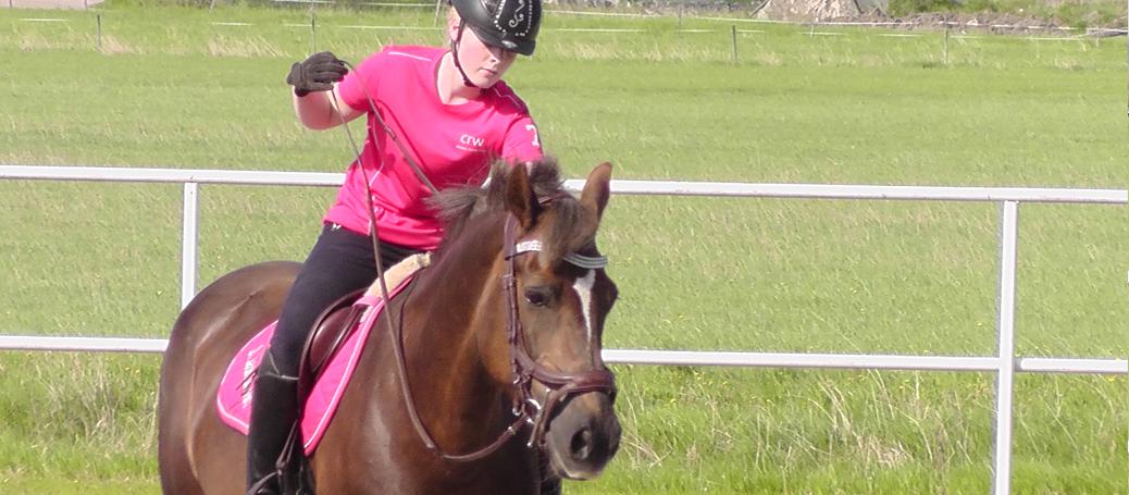 Träning av unga hästar